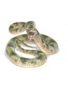 Serpientes - Lagartos