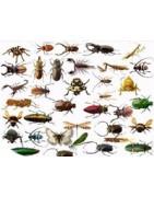 Todo tipo de insectos