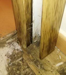Eliminar termitas y carcoma
