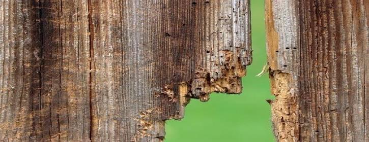 Limpieza y eliminación de Carcoma