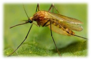 Empresa fumigación plaga mosquitos en Sevilla