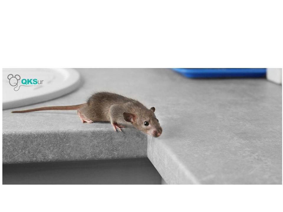 QKSUR eliminar rata cocina