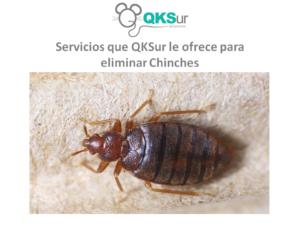 QKSur Servicios eliminar Chinches
