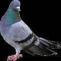 Control de Aves QKSur