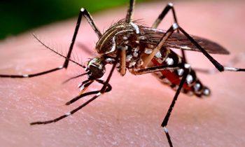 fumigación mosquitos en Sevilla